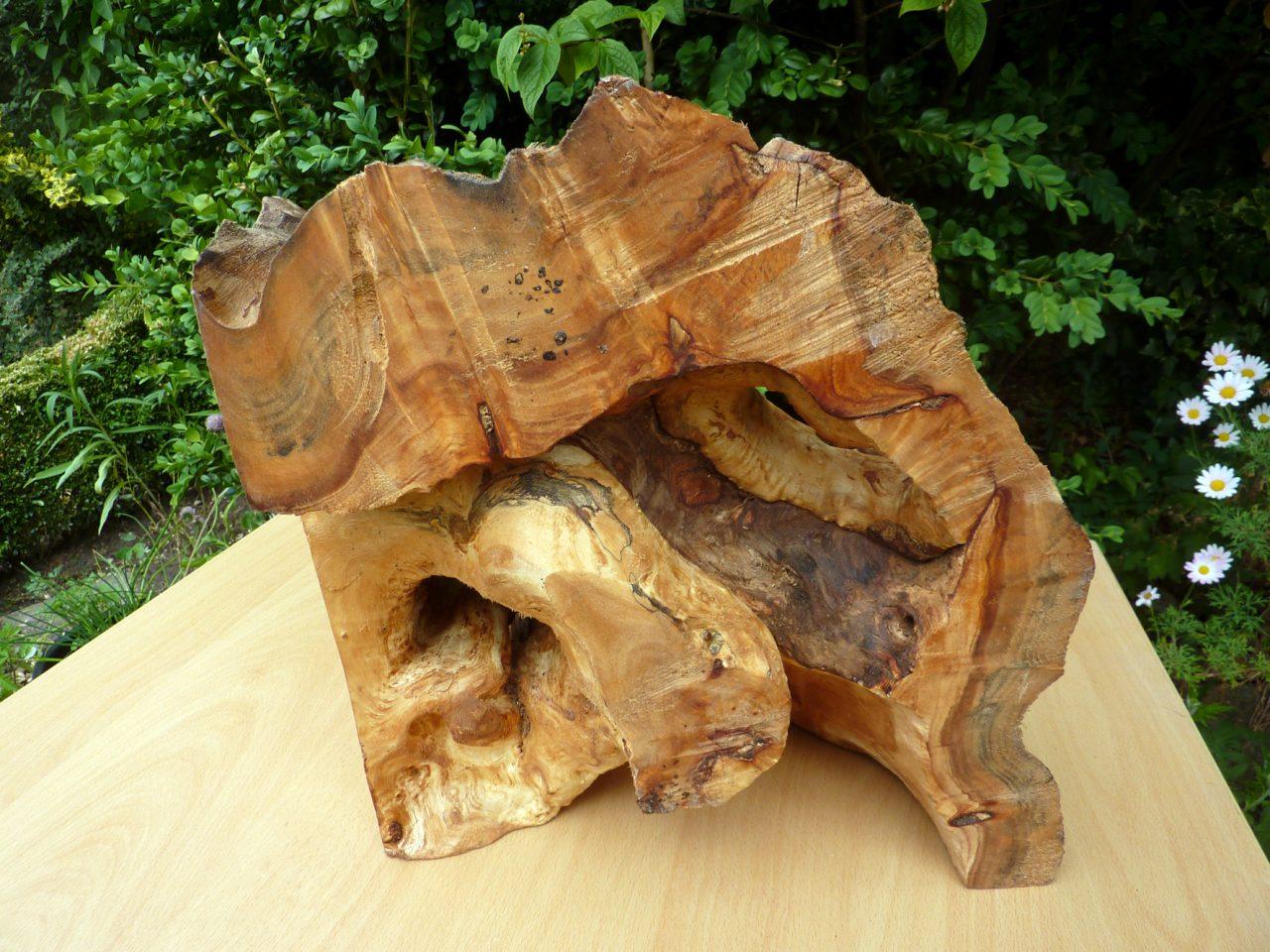 fraai natuurlijk gevormd stuk hout, wilgenhout