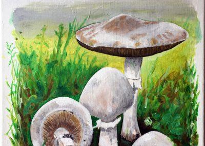 Jos Koedam, paddenstoelen